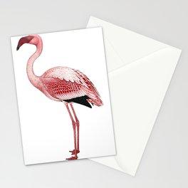 Pink Flamingo Isolated Stationery Cards