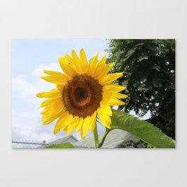une seule fleur Canvas Print