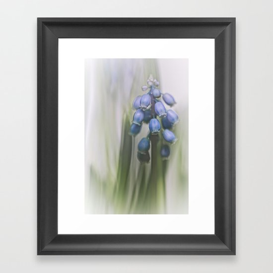 Grape Hyacinth VII Framed Art Print