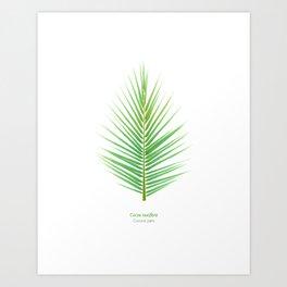 Tropical Vibes Collection: Cocos nucifera Art Print