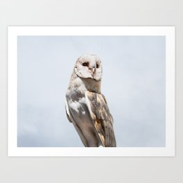 Owl Portrait Photography Art Print