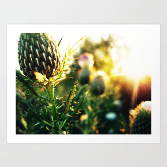 Thistle n Sun Art Print