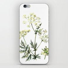 watercolor dill iPhone & iPod Skin