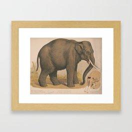 Vintage Elephant Illustration (1874) Framed Art Print