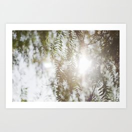 Spring Fern Art Print
