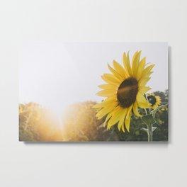 Golden Sun, II Metal Print