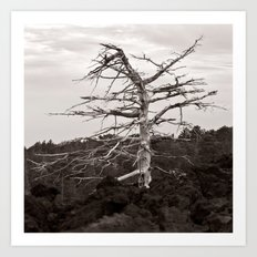 Dead Tree of the Volcano Etna Sicily Art Print