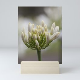Agapanthus Painting Mini Art Print