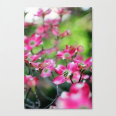 Pink Dogwood in the Spring Canvas Print