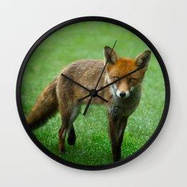Wild Red Fox Wall Clock