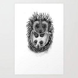African pygmy hedgehog Art Print