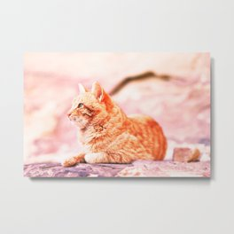 313. The Red Cat, Petra, Jordanie Metal Print