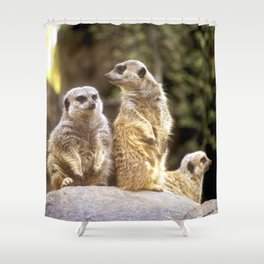 Act Natural Meerkats Shower Curtain
