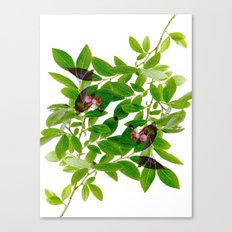Blueberry Branch in Spring Canvas Print