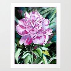 Rose Peony Art Print