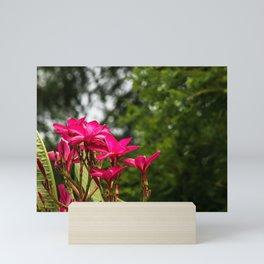 Pink Plumeria Mini Art Print