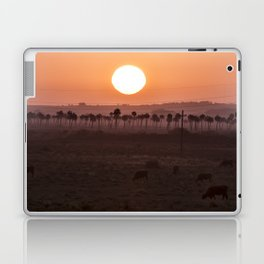 Sunset in the palm trees Laptop & iPad Skin