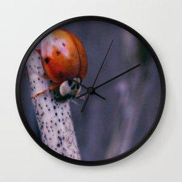 Macro ladybug Wall Clock