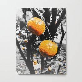 fresh orange fruit in the garden Metal Print