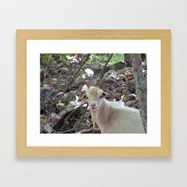 Handsome Fellow Framed Art Print