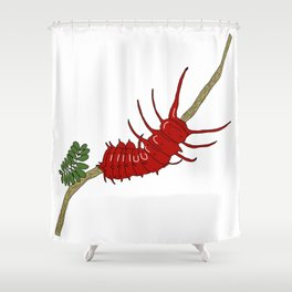 Pipevine swallowtail caterpillar Shower Curtain