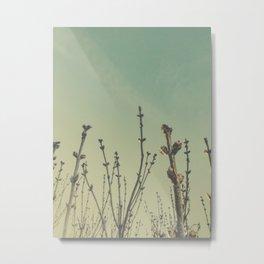 lilac buds Metal Print