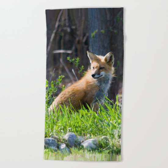 Foxy in the Morning Beach Towel