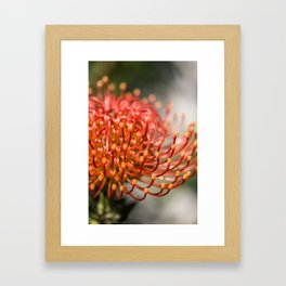 Exotic Pin Cushion Protea Flower- Botanical Photography #Society6 Framed Art Print
