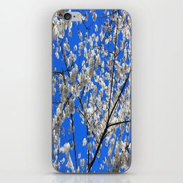 Cherry Blossoms in DC iPhone Skin