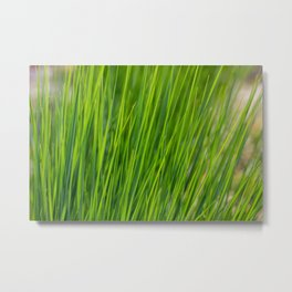 Blades of Grass Fine Art Metal Print