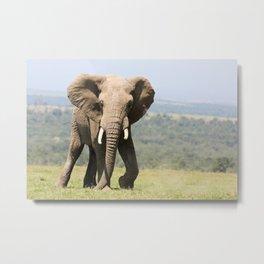Bull Elephant Metal Print