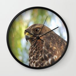 Young Red-Shouldered Hawk in a Desert Willow Wall Clock