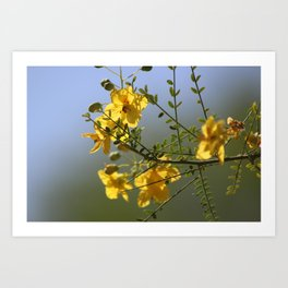 Closeup of Palo Brea Branch in Bloom Art Print