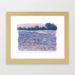 Champ de lavande Framed Art Print