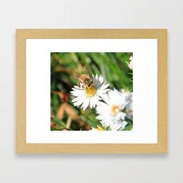 Bee Balancing Act Framed Art Print