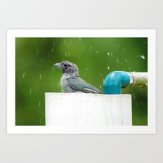 bird in a bath Art Print