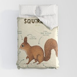 Anatomy of a Squirrel Comforters