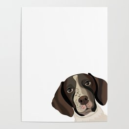 German Shorthair Pointer peeking dog portrait cute art gifts for dog breed lovers Poster