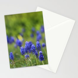 Grape Hyacinth in Spring Stationery Cards