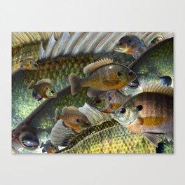 Bluegill Kaleidoscope 3 Canvas Print
