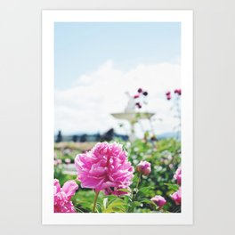 Pink Flowers in the Boboli Gardens Art Print