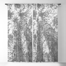 Way Up High | Tall Trees | Landscape Photography | Nature | Forest Sheer Curtain