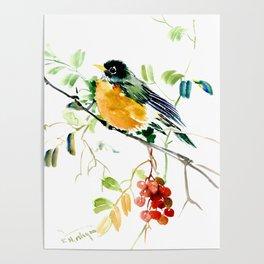 American Robin bird art Poster