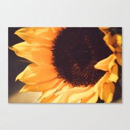SunFlower (1) Canvas Print