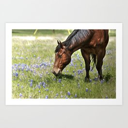 Don't Eat The Bluebonnets Art Print