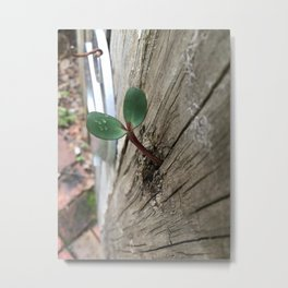 Plant sprout gate Metal Print