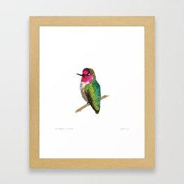 Anna's Hummingbird Framed Art Print