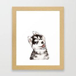 Baby Husky Framed Art Print