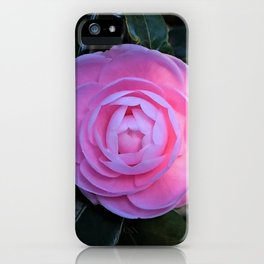 Pink Camellia Flower Blossom iPhone Case