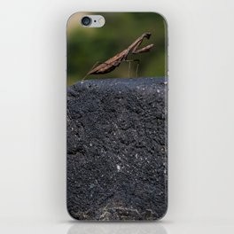 Praying Mantis of the Great Wall iPhone Skin
